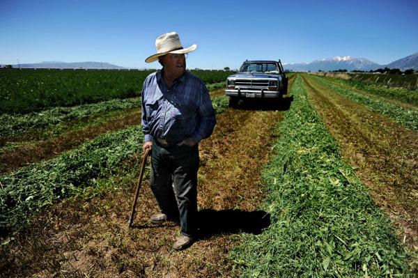 Grandpa in his field in Wrangler Jeans