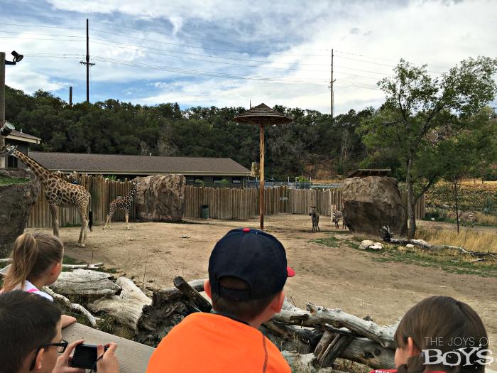 Utah's Hogle Zoo African Savannag