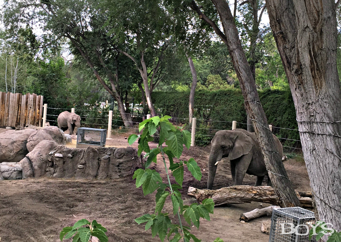Elephant Encounter at Hogle's Zoo