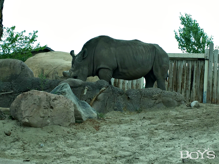 Rhino at Hogle Zoo