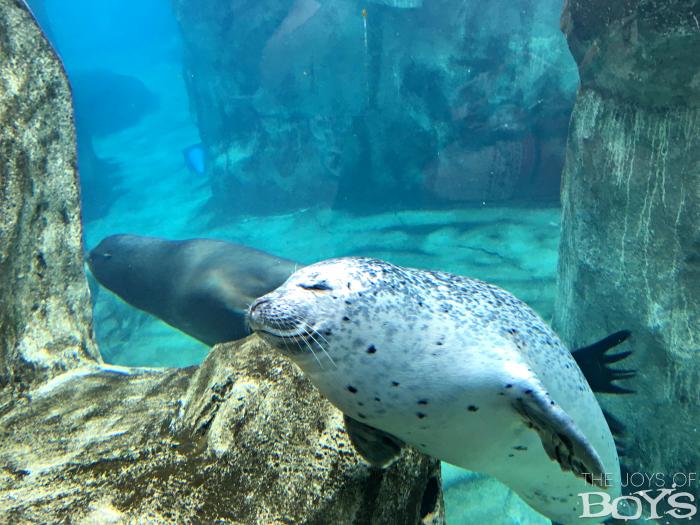 Seals at Hogle Zoo