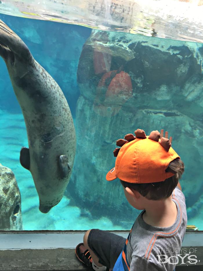 Hogle Zoo seals