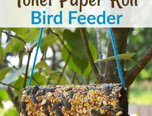 Toilet Paper Roll Bird Feeder – Easy Camping Craft
